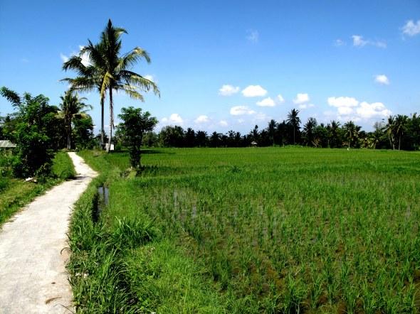 pathway rice
